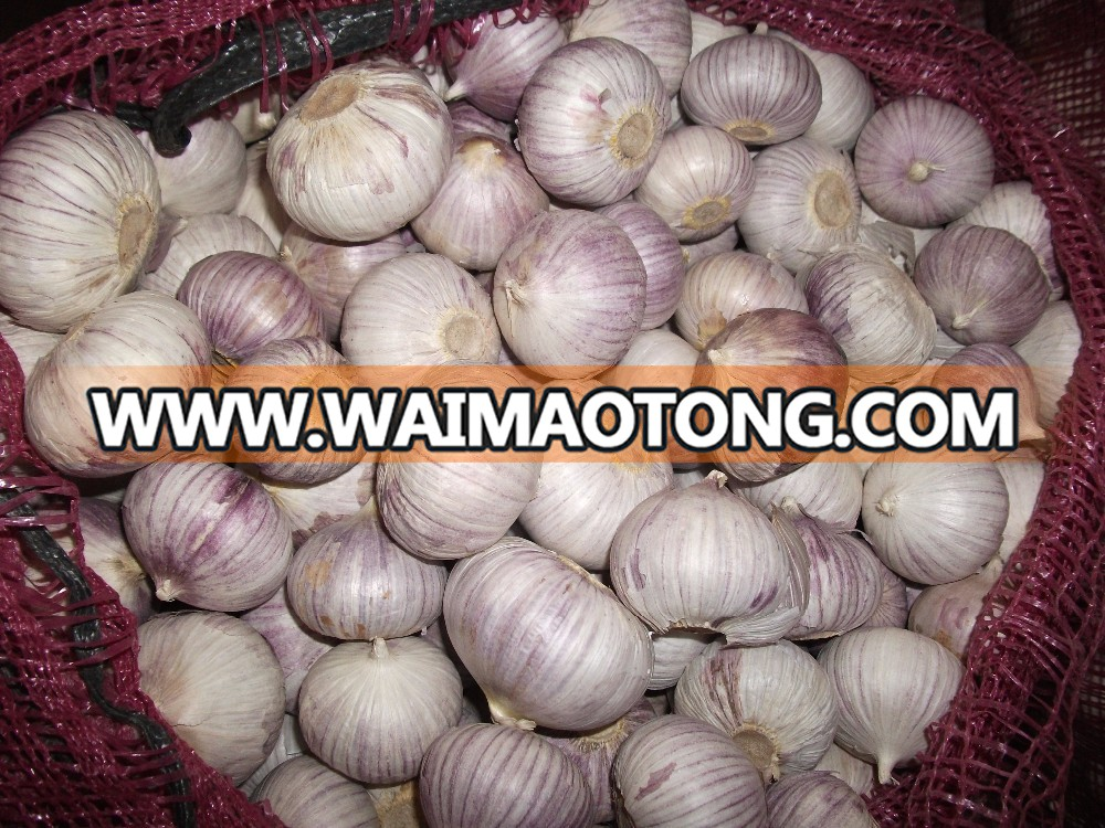 2017 new crop fresh Chinese solo garlic bulk pack