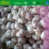 fresh  white garlic size 5.5 cm