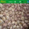 fresh  white garlic size 4.5 cm