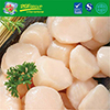 Frozen Sea Scallop/Strong Scallop