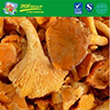Wild Good Quality Frozen Chanterelle