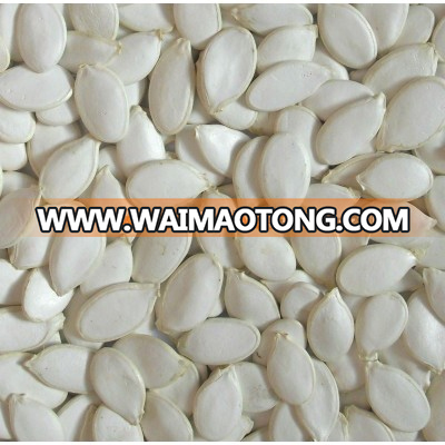 Chinese white pumpkin seeds,snow white,best quality