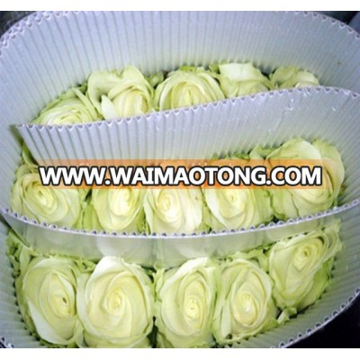Best Wholesale selling Fresh White Roses Cut Fresh Flowers For Weddings