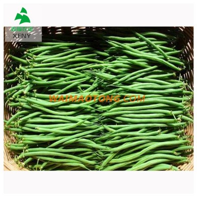 Healthy and organic green vegetable frozen whole green beans
